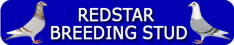 Redstar Breeding Banner 2